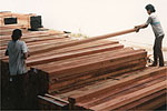 Timber being stacked up at our timber terminal